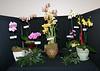 Franklin Park Conservatory (6 Grand Atrium [orchid show]) - 20080329 (1226p) 09980