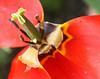 D 04072008 Sisters' Garden, Chapel Hill NC (05-0419, 146p) (closeups)