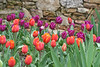 C 04072008 Sisters' Garden, Chapel Hill NC (09-0462, 247p) (garden)