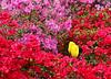 00aFavorite C 04072008 Sisters' Garden, Chapel Hill NC (01-0478, 309p) (garden)