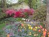 00aFavorite C 04152015 Sisters' Garden, Chapel Hill NC (01-, 1329p) (garden)