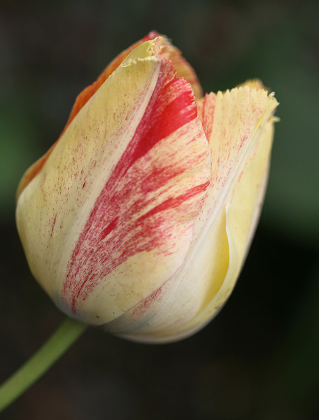 D 04072008 Sisters' Garden, Chapel Hill NC (08-0438, 210p) (closeups)