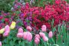 C 04142009 Sisters' Garden, Chapel Hill NC (02-4805, 726p) (garden)