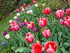 C 04012018 Sisters' Garden, Chapel Hill NC (558p) (garden)