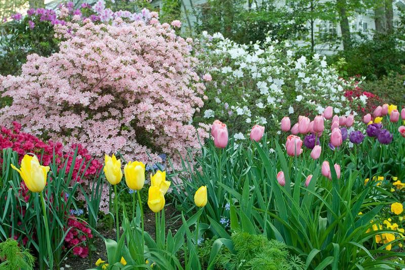 C 04172009 Sisters' Garden, Chapel Hill NC (03-4886, 1921p) (garden)