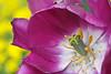 00aFavorite D 04072008 Sisters' Garden, Chapel Hill NC (01-0420, 147p) (closeups)