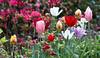C 04232008 Sisters' Garden, Chapel Hill NC (04-0205, 625p) (garden)