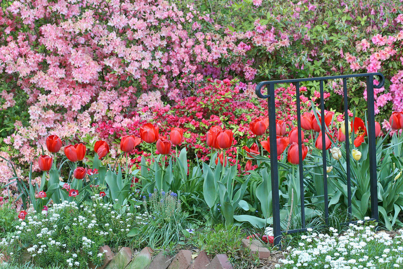 C 04082007 Sisters' Garden, Chapel Hill NC (04-3566, 455p) (garden)