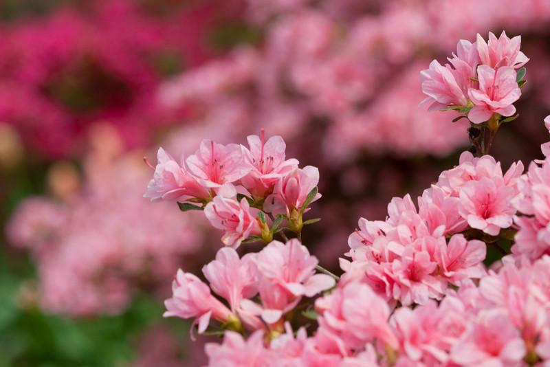 D 04082009 Sisters' Garden, Chapel Hill NC (09-4502, 1155p) (closeups)