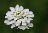 D 04072008 Sisters' Garden, Chapel Hill NC (04-0461, 246p) (closeups)