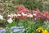 C 04212014 Sisters' Garden, Chapel Hill NC (02-0636, 1849p) (garden)