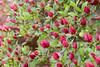 D 04082009 Sisters' Garden, Chapel Hill NC (10-4505, 1158p) (closeups)