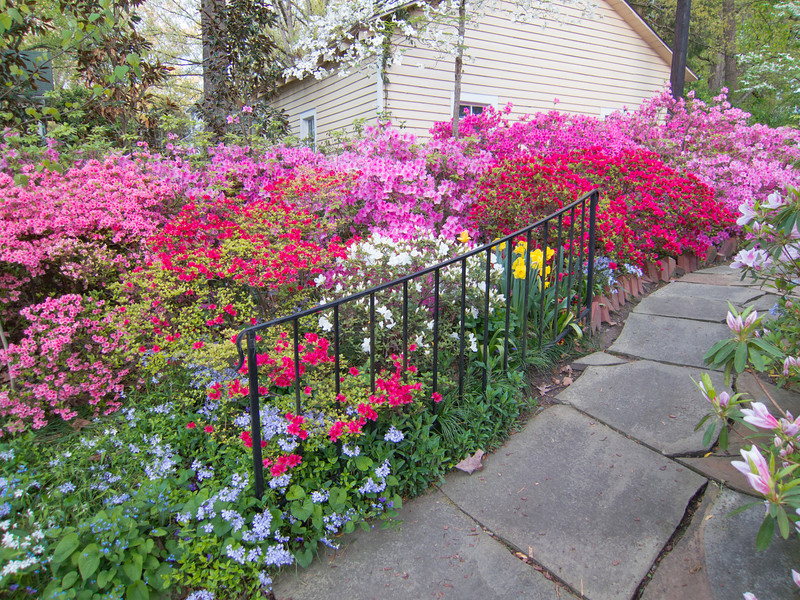 C 04202014 Sisters' Garden, Chapel Hill NC (01-9193, 1924p) (garden)