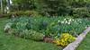 C 04232008 Sisters' Garden, Chapel Hill NC (02-0208, 629p) (garden)