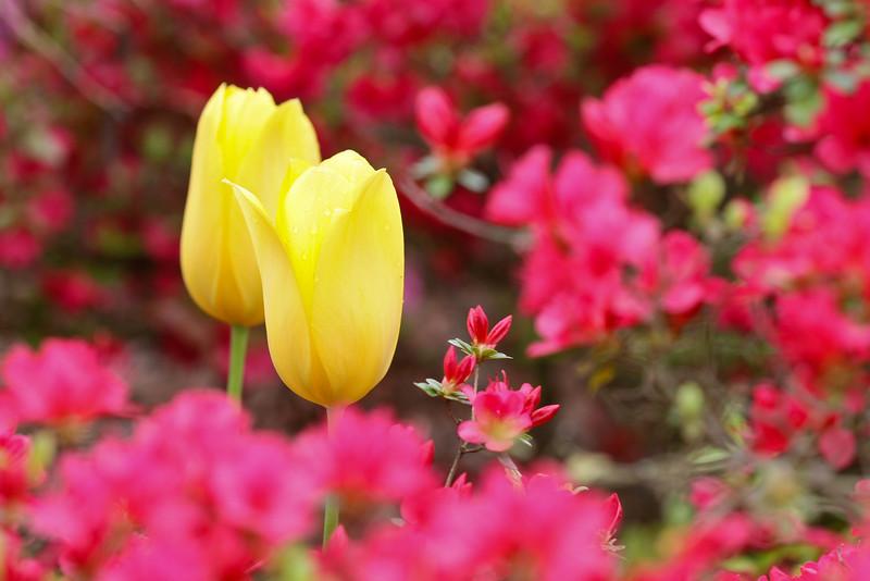 D 04072008 Sisters' Garden, Chapel Hill NC (02-0436, 206p) (closeups)