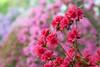 D 04172009 Sisters' Garden, Chapel Hill NC (06-4864, 1818p) (closeups)