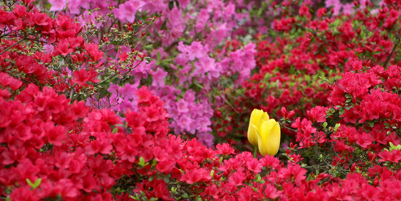 C 04072008 Sisters' Garden, Chapel Hill NC (07-0479, 309p) (garden)