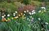C 04232008 Sisters' Garden, Chapel Hill NC (03-0211, 631p) (garden)