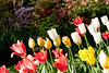D 04172009 Sisters' Garden, Chapel Hill NC (03-4852, 1758p) (closeups)