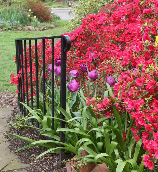 C 04072008 Sisters' Garden, Chapel Hill NC (03-0406, 128p) (garden)
