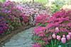 C 04172009 Sisters' Garden, Chapel Hill NC (01-4848, 1751p) (garden)