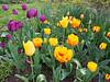 C 04012018 Sisters' Garden, Chapel Hill NC (600p) (garden)