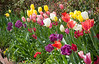 C 04082009 Sisters' Garden, Chapel Hill NC (12-4509, 1209p) (garden)