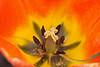 D 04072008 Sisters' Garden, Chapel Hill NC (06-0467, 255p) (closeups)