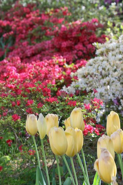 C 04082007 Sisters' Garden, Chapel Hill NC (03-3446, 426p) (garden)