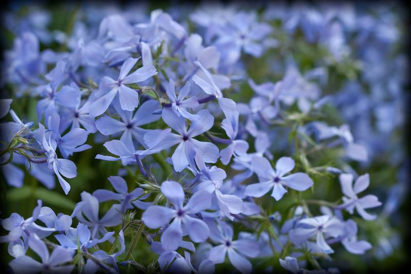 D 04172009 Sisters' Garden, Chapel Hill NC (05-4863, 1817p) (closeups)