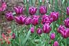 C 04072008 Sisters' Garden, Chapel Hill NC (08-0443, 223p) (garden)
