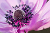 00aFavorite D 04172009 Sisters' Garden, Chapel Hill NC (01-4867, 1819p) (closeups)