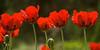 Botanical-Garden_DSC0631-(2006-05-28)