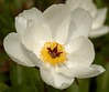 Botanical-Garden_DSC0578-(2006-05-28)
