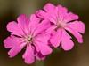 Botanical-Garden_DSC0636-(2006-05-28)