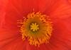 Botanical Gardens_DSC0538-(2009-05-22)