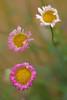 Botanical Gardens_DSC0508-(2009-05-22)