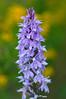 Botanical Gardens_DSC0593-(2009-05-22)
