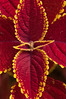 Botanical Gardens_DSC7044_2010-08-08