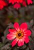 Botanical-Gardens_DSC7128_2010-08-14