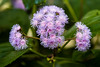 Flowers & plants at the Geneva Botanical Gardens
