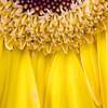 Flower074d