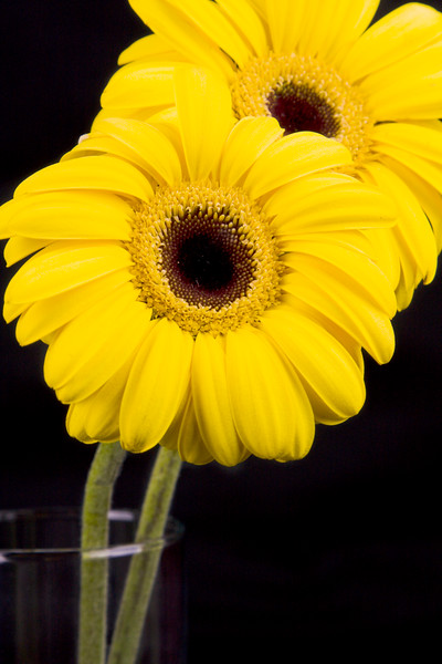 Flower074a