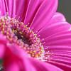 Flower011c - (0144)