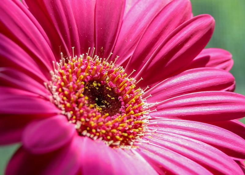 Flower011d - (0187)