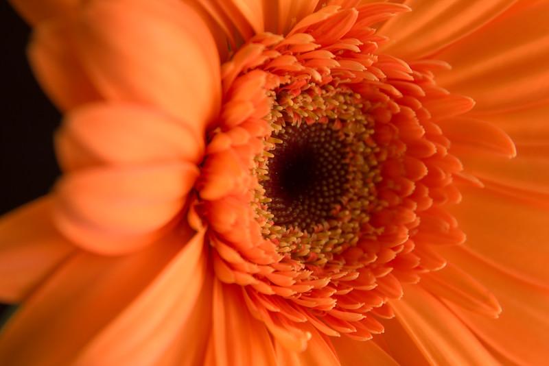 Flower054b (Daisy)