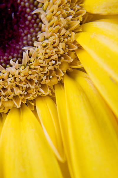 Flower074e