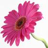 Flower011b - (048)