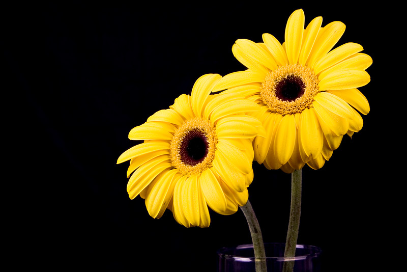 Flower074b