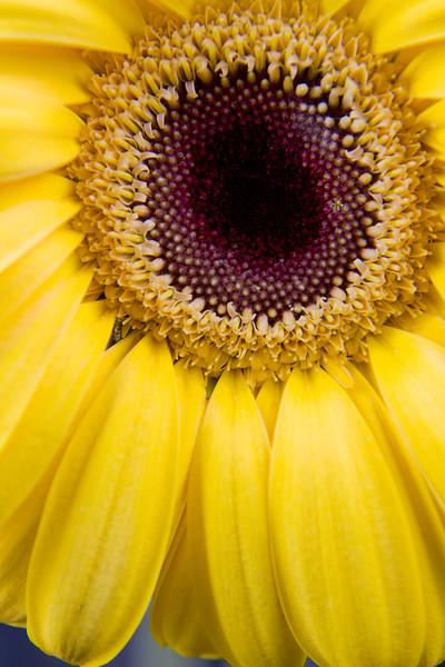 Flower074c